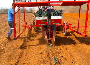tecnología en campos de agave casa sauza