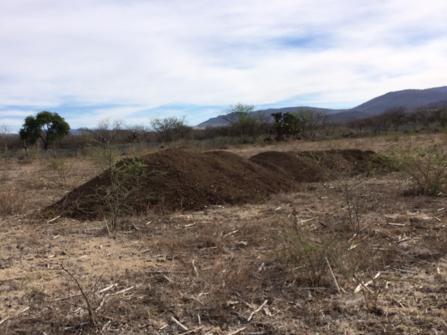 suelo para sembrar agave