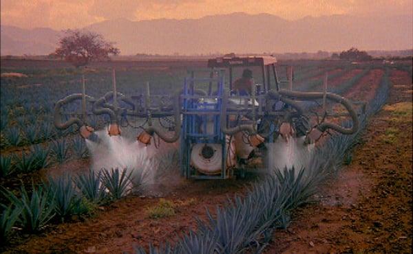 Casa Sauza tpm in agriculture