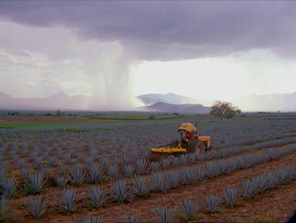 TPM en el campo de agave producción de tequila