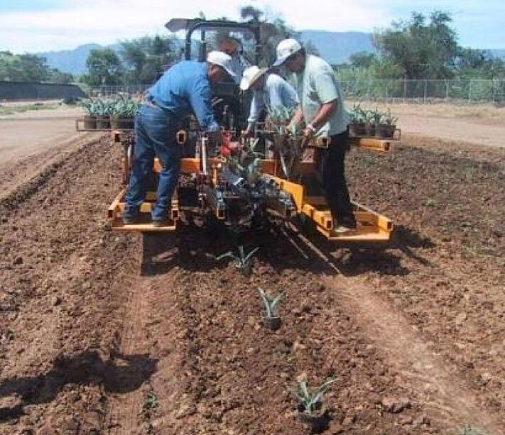 Máquina plantadora de Agave de Casa Sauza