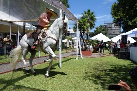 charreria y fiesta mexicana