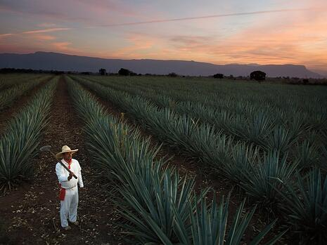 casa sauza purest tequila taste of agave