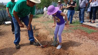 Planta tu agave - Casa Sauza