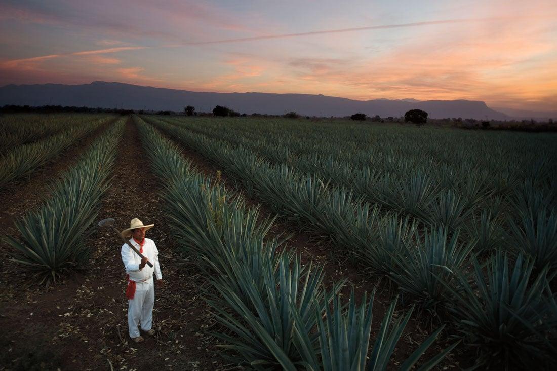 Casa Sauza Tequila Distillery