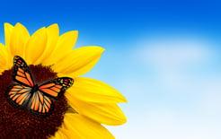 animal pollinators in agriculture casa sauza