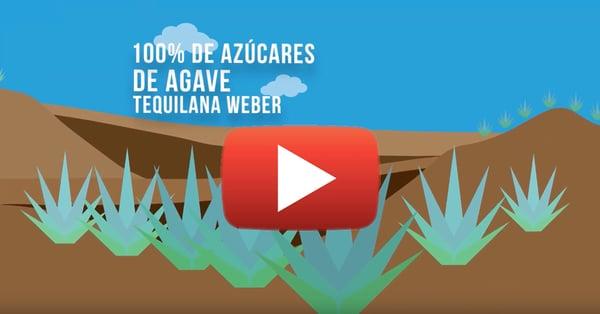 Videos-Casa-Sauza